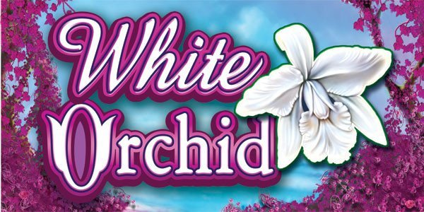 White Orchid™ Slot Machine Game to Play Free in IGTs Online Casinos