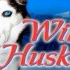 Wild Huskies Slot Online