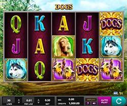 Dog Slot