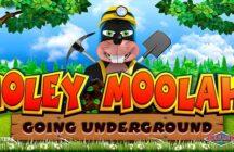 Moley Moolah!