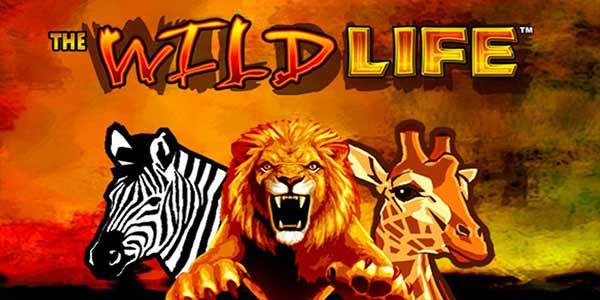 Slots Wild